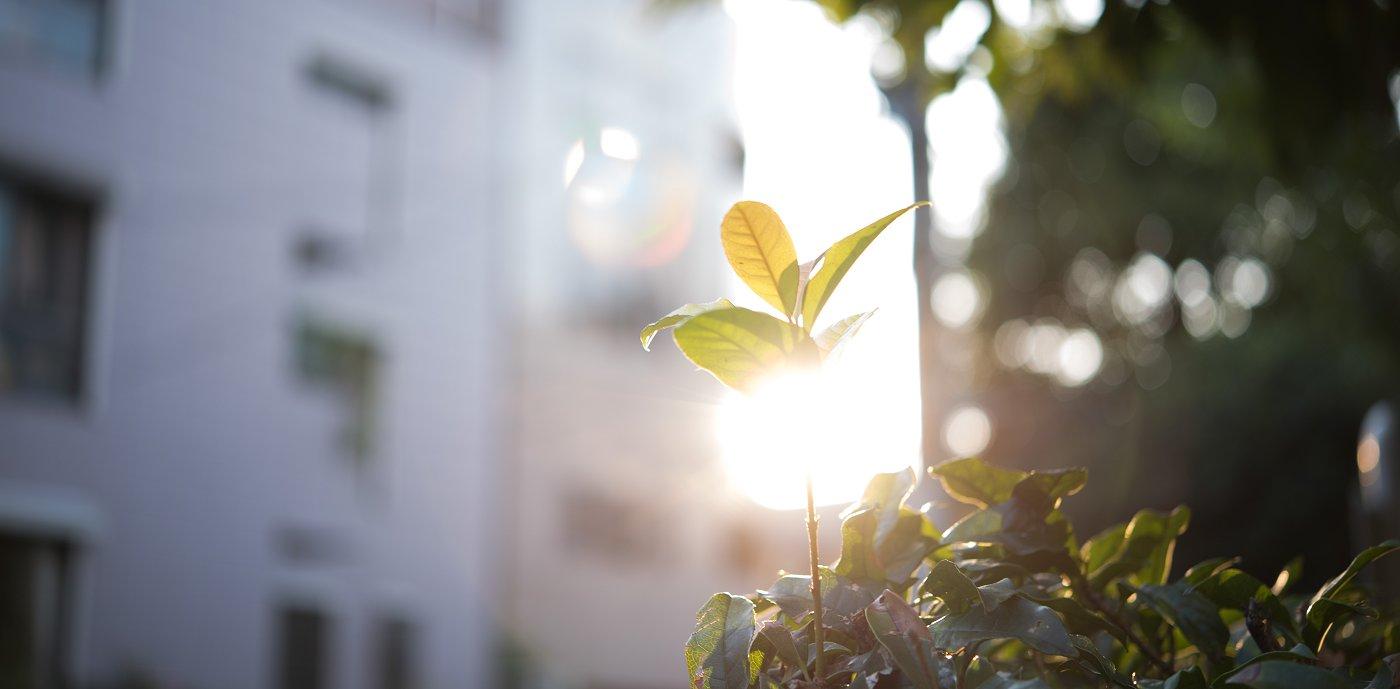Nærbilde av plante i urbant strøk